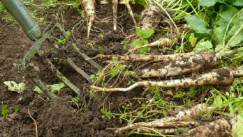 Moestuin november: planten en oogsten