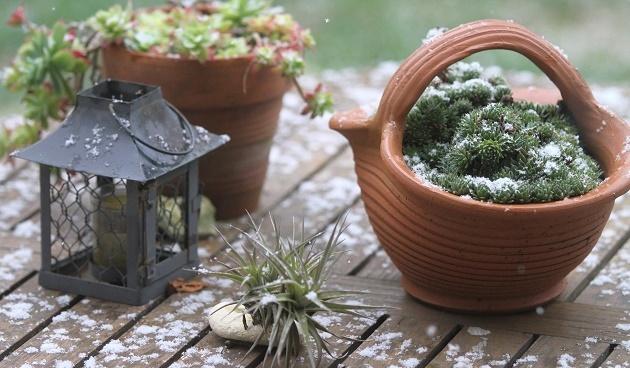 Potten Voor Planten.Planten Beschermen Tegen Vorst Handige Tips En Tricks