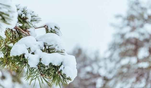 sneeuw in tuin