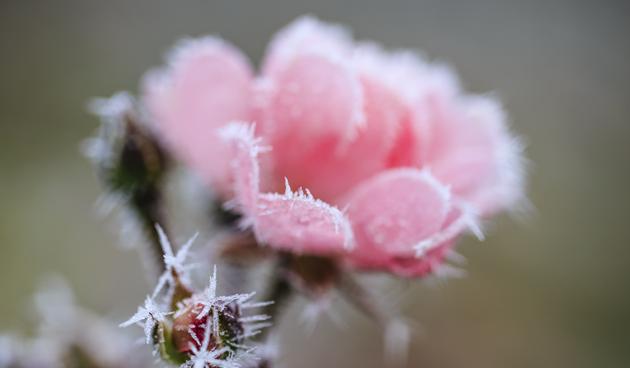 roos wintertuin