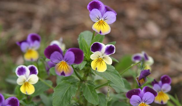 Vrolijke planten in januari – februari