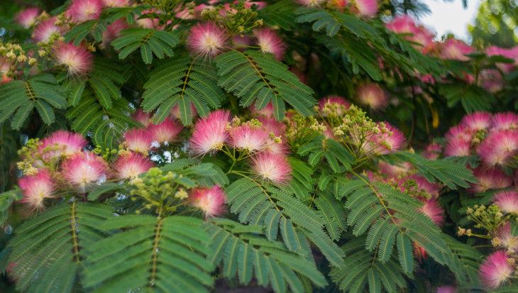 De 11 mooiste kleine bomen (+foto's!)