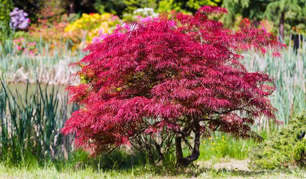 Bomen In Tuin : Bomen in de tuin tuinseizoen