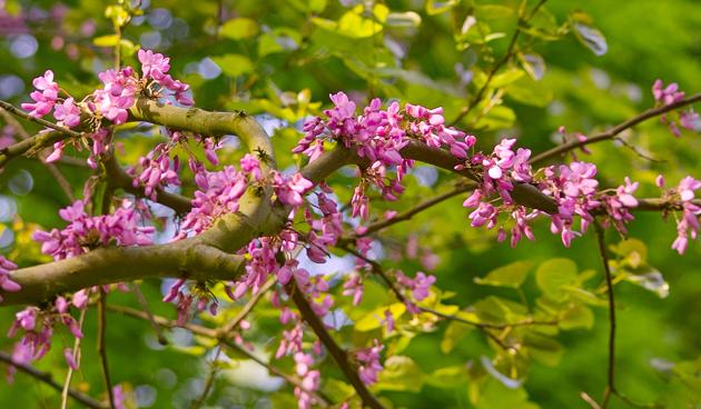 Bomen In Tuin : 7 mooie kleine bomen: prachtige bomen voor in een kleine tuin