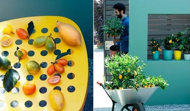 citrusboompjes