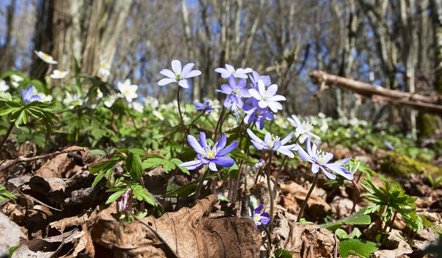 De tuin in maart