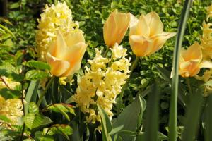 tulpen combineren