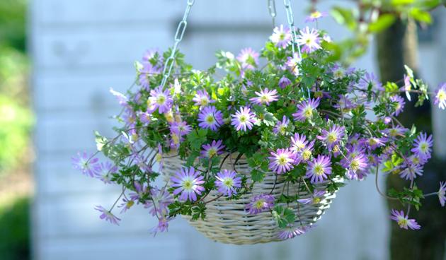 Voorjaarsbollen voor meer sfeer