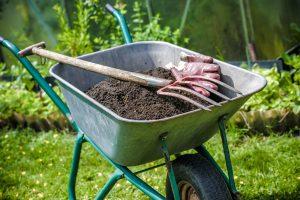 forsythia snoeien: heester verplanten