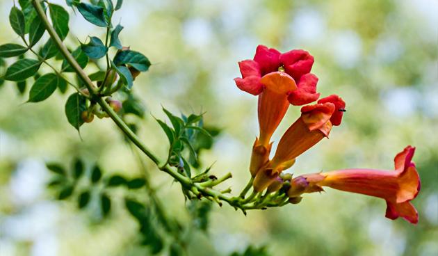 Klimplanten in juli