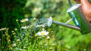 Warm en droog weer? Verzorg je planten goed!