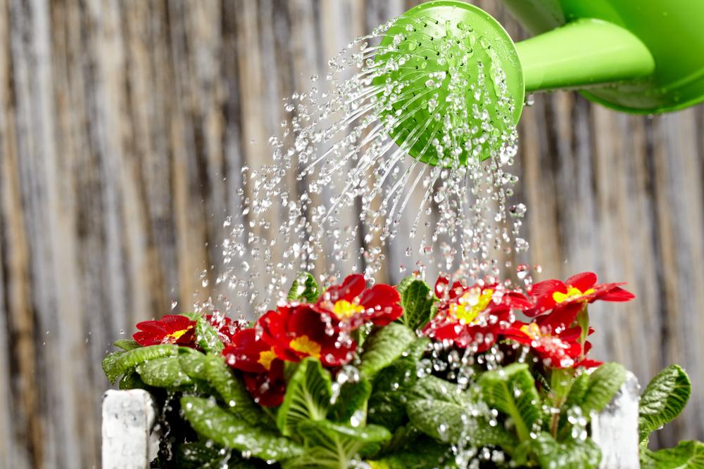 planten watergeven