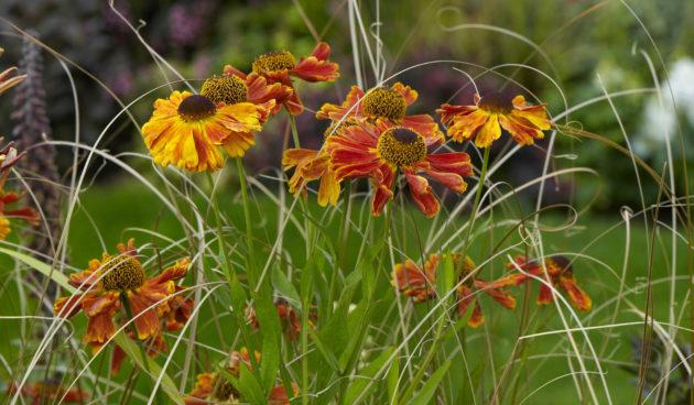 Zonnig oranje in de tuin