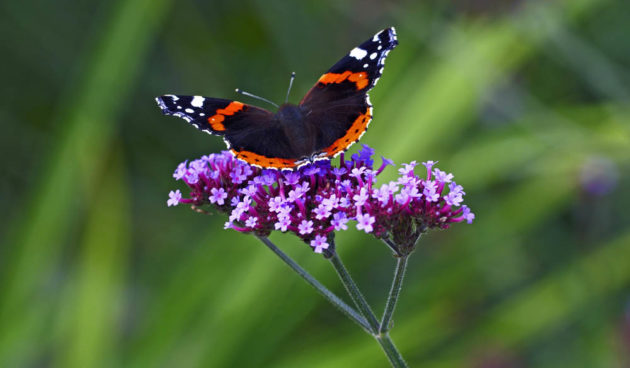 vlinder-e1503995776882.jpg
