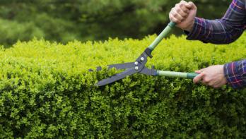 Tips voor hagen snoeien