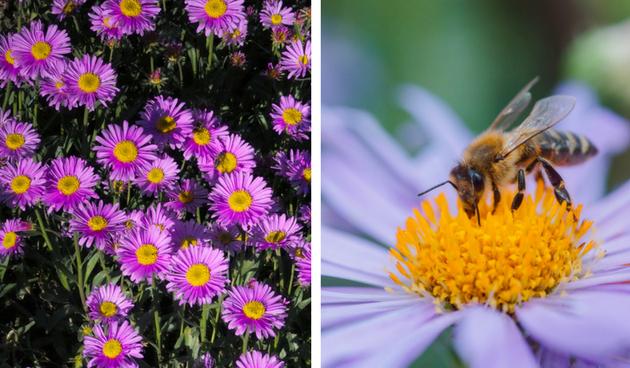 10 bijen- en vlindertoppers