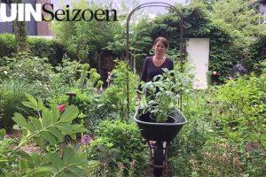 Dahlia's uitplanten - Tuinseizoen