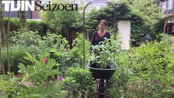 Dahlia's uitplanten - Tuinvlog