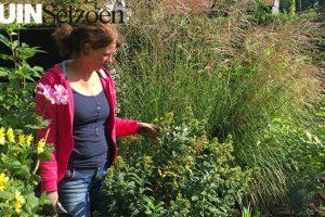 vaste planten scheuren - tuinvlog