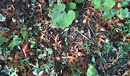 Bloembollen planten - Tuinvlog