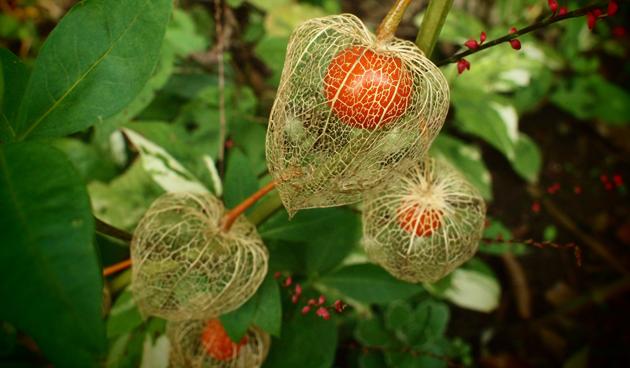 decoreren met planten uit eigen tuin