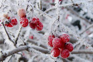 5x winterse bloeiers