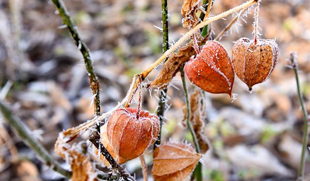 5x prachtige winterse bloeiers
