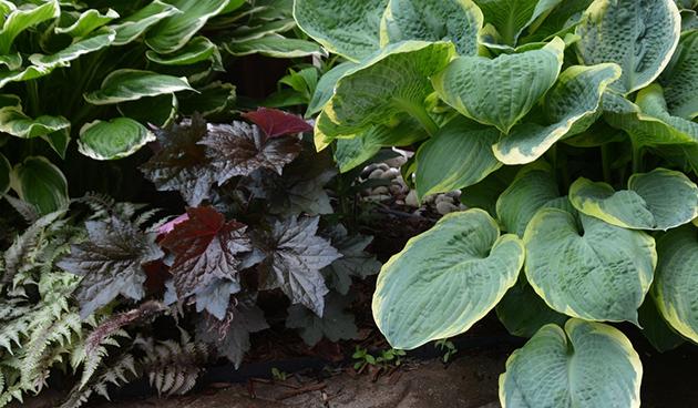Schaduwplanten op een rij