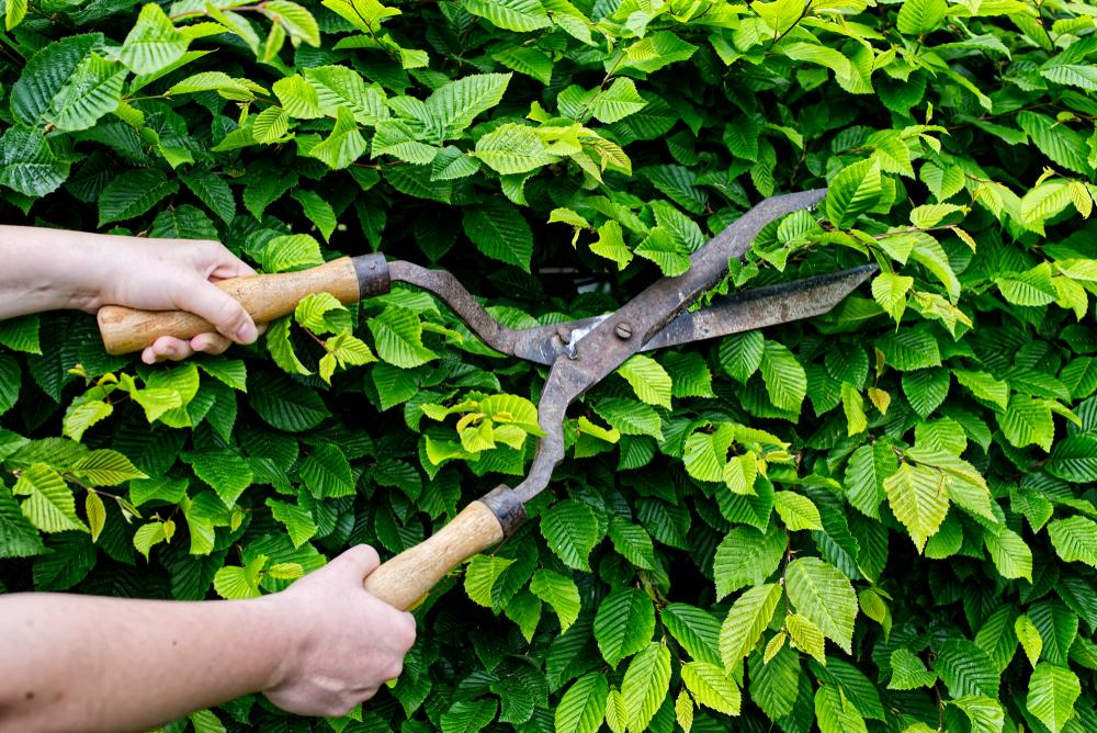 tuinklusjes in juni, haag snoeien, tuinseizoen