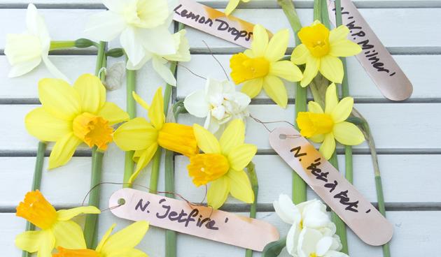Voorjaarsfeest met narcissen!