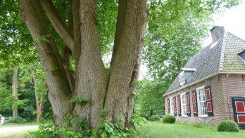 Dit zijn de oudste bomen van Noord-Holland