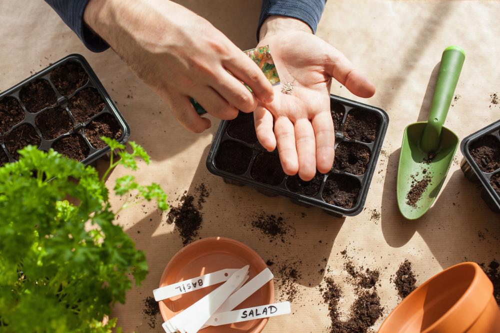 sla zaaien, tuinklusjes in juli, moestuin, tuinseizoen