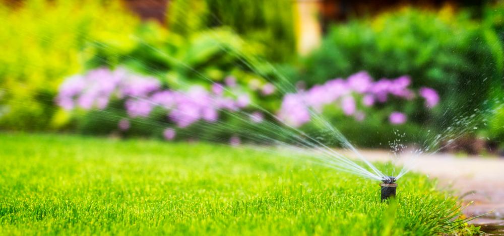 sproeier, tuinklusjes in juli, tuinseizoen