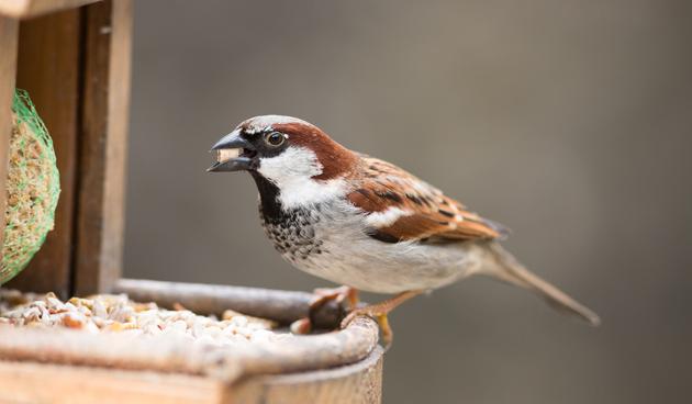 Vogels voeren met vorst