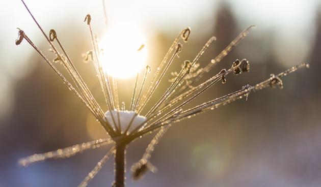 Vorst en zon: wacht met tuinieren!