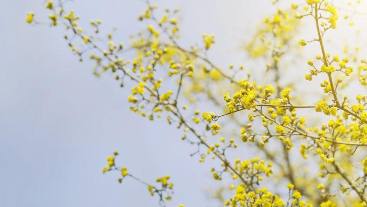 5 planten waar je vrolijk van wordt!
