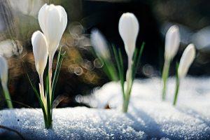 koudste lente sinds 70 jaar