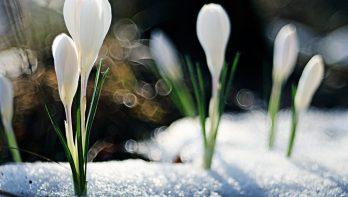 Start koudste lente sinds 70 jaar