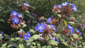 Win: Hoe heet deze plant? Tuinseizoen mei 2018