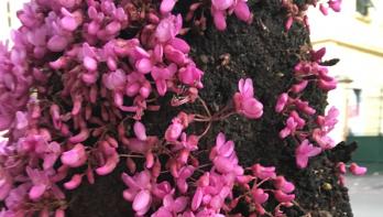 Hoet heet deze plant? Tuinseizoen juni