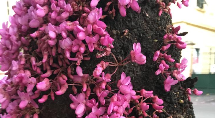 Hoe heet deze plant Tuinseizoen juni - Raad en win!