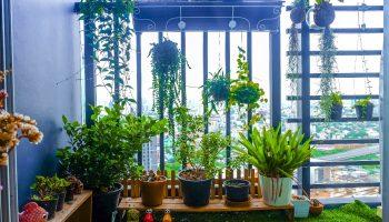Tuinieren op hoogte - Pricewise