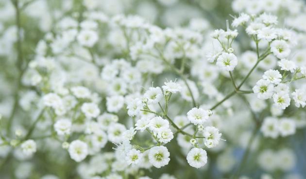 Goede 6 x planten die goed tegen droogte kunnen: planten en droogte VM-58