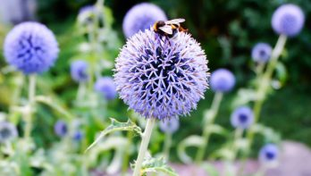 6 x planten die goed tegen droogte kunnen