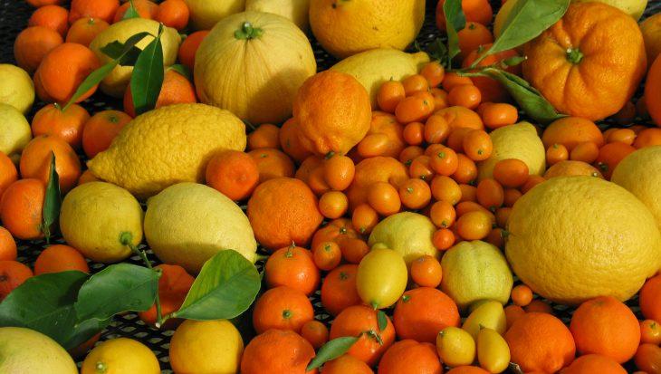 Tips van een citruskenner