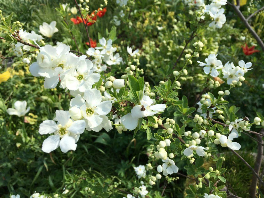 Hoe heet deze plant Tuinseizoen juli