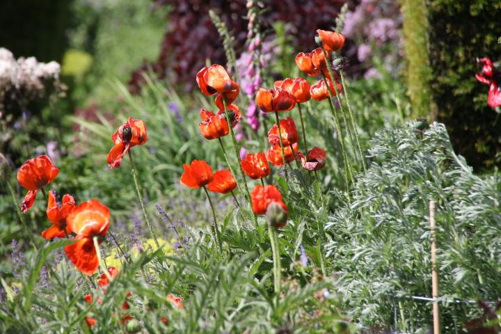 Schotland tuinen