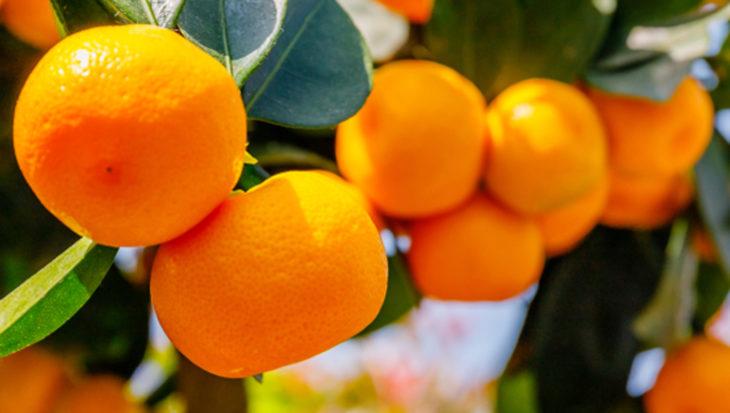 Tips voor citrusplanten van Ben Buynsters