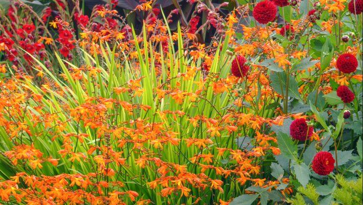 5x planten voor de hot border