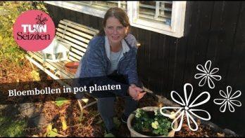 Bloembollen in pot planten - Tuinvlog